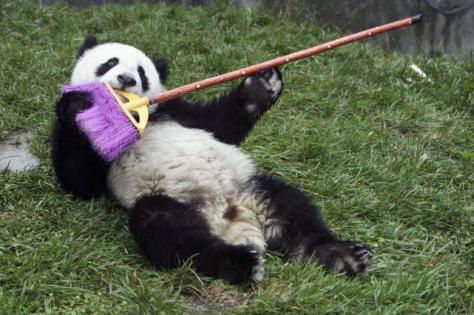 PandaBroom